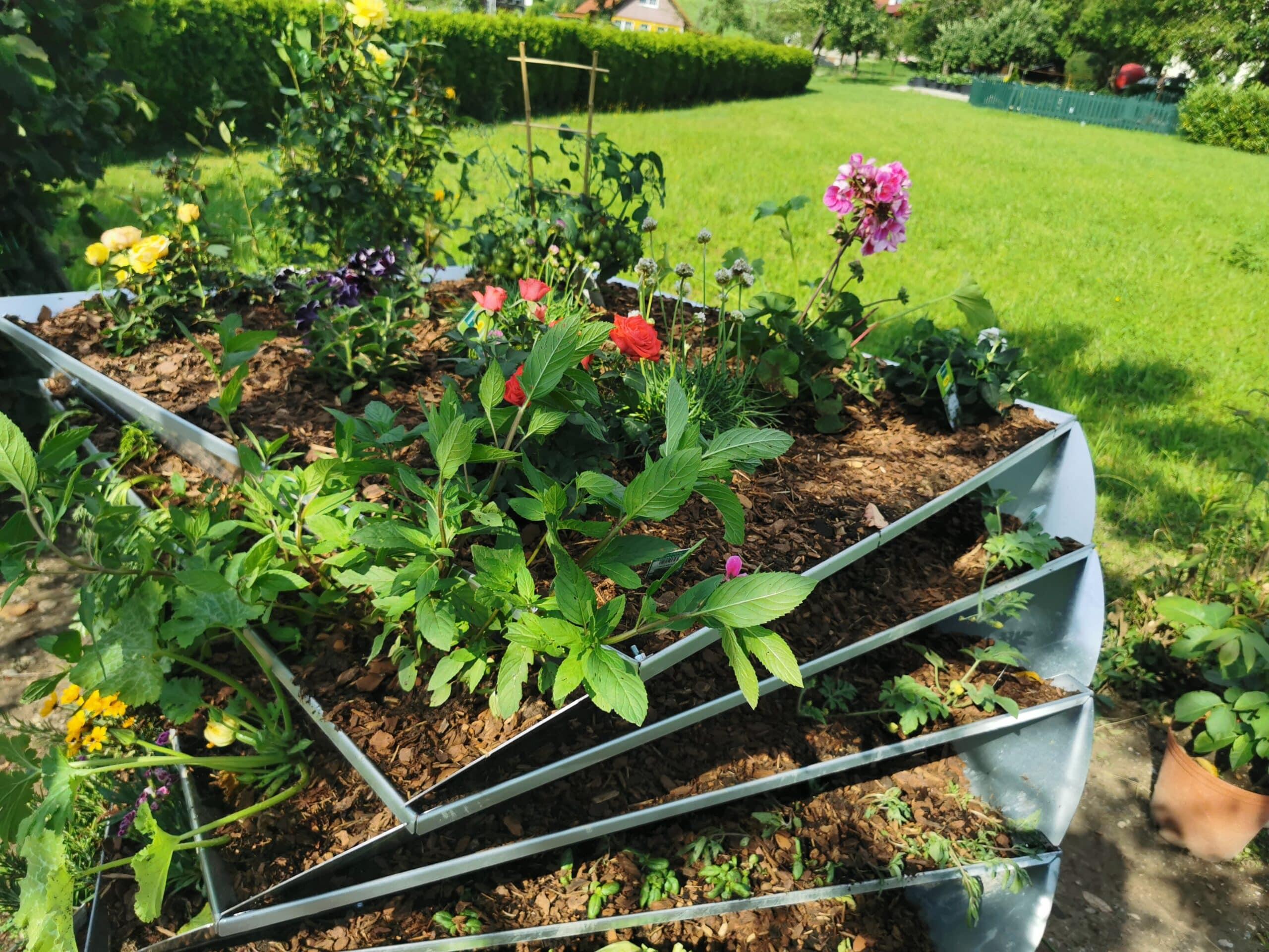 avantgarden-hochbeet-gemuese-bepflanzt